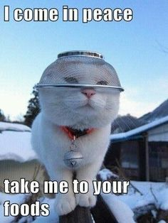 54 Cats Pictures | Funny Cat | DomPict.com