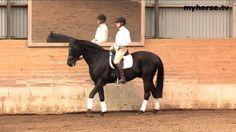 Basic Training - Part E - The Turn of the Horse