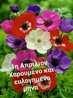 Mina, New Month, Greek Quotes, Celebrities, Kuchen, Celebs, Celebrity, Famous People