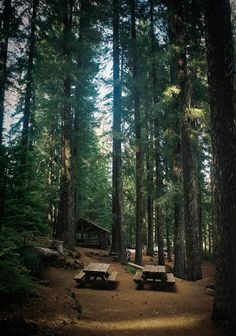 www.editionlocal.com >> Cabin in the Redwoods >> Marin County, California.