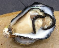 Oester Perle Blanche