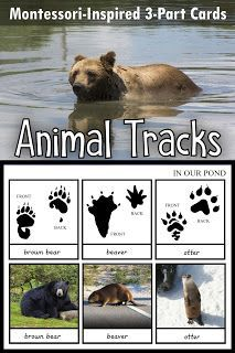 Montessori-Inspired Animal Tracks Cards - In Our Pond Animal Activities For Kids, Outdoor Activities For Kids, Winter Activities, Preschool Activities, Nature Activities, Preschool Printables, Free Printables, Montessori Science, Montessori Homeschool