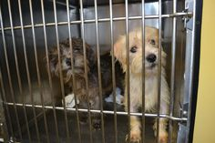 16 Pups Piled Into Crates Left At Human Society In Miami