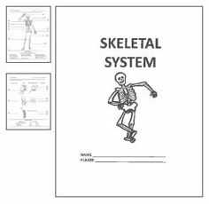 This packet guides students through the skeletal system unit. It explores topics such as names of bones, joints and skeletal injuries.