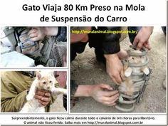 Mural Animal: Gato Viaja Preso na Mola de Suspensão do Carro