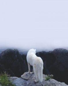 The Adventures Of John & Wolf Dog Photography  Fubiz