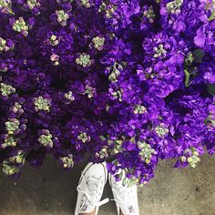 Purple flowers & my chucks http://rstyle.me/n/zk7trbgzq7