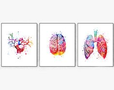 Anatomy Print Set Lungs Heart Brain Anatomy Watercolor Cardiology Decor Medical Art Print Science Art Poster Medicine Doctor Clinic Decor This is an Instant Digital Download You can print in size : 11x14 ( 28X35 cm) or 8x10 (20X26 cm) Format: JPG Resolution: 300 dpi I CAN CHANGE SIZES