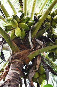Key West Inspiration   Coastal Living   Palm Tree  Serafini Amelia