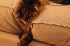 Mi sono messo sul divano dalla parte sbagliata e allora i cuscini si sono sentiti presi in giro, mi hanno schiacciato e niente, sono morto.