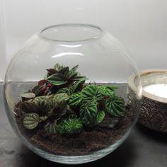 id e d co terrarium le mini jardin s invite la maison terrarium sables et garten. Black Bedroom Furniture Sets. Home Design Ideas