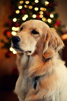 Beautiful Golden                                                                                                                                                                                 More