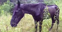Every Day, This Hungry Old Horse Stands All Alone. Then A Couple Comes Up And Does This... - S everal years back, Joey found a starving old horse on the top of a mountain. Someone dragged the horse up there by a four-wheeler and him lef...