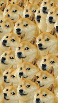 DOGE WALLPAPER