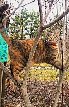 Look what I can do!                                       #cats #lolcats #animals #pets