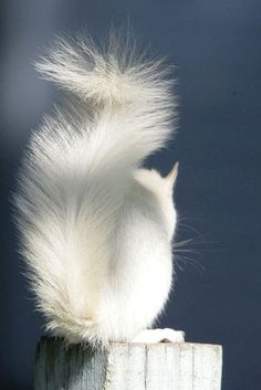An albino squirrel. What a beautiful critter! Amazing Animals, Animals Beautiful, Baby Animals, Cute Animals, Wild Animals, Baby Cats, Tier Fotos, Mundo Animal, All Gods Creatures