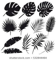 Find Set Palm Leaves Silhouettes Isolated On stock images in HD and millions of other royalty-free stock photos, illustrations and vectors in the Shutterstock collection. Leaf Stencil, Stencil Art, Motif Jungle, Leaf Silhouette, Butterfly Drawing, Stencil Patterns, Sgraffito, Tropical Art, Leaf Art
