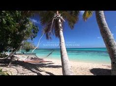 """""""Islands of Paradise"""" Fiji 1 HR (Nature Sounds) Tropical Relaxation Video Relaxing Gif, Relaxing Music, Family Beach Pictures, Winter Pictures, Virtual Field Trips, Nature Sounds, Natural Scenery, Relaxation Video, Fiji"""