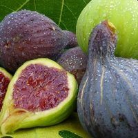 How To Fight Diabetes, Triglycerides, Cholesterol And Ulcer With Fig Fruit And Leaves Natural Herbs, Natural Health, Au Natural, Health Chart, Cure Diabetes Naturally, Fresh Figs, Plantation, Natural Home Remedies, Ayurveda