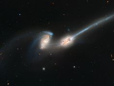 'The Mice' (NGC Hubble Space Telescope's Advanced Camera For Survey captured this image of 2 galaxies from the constellation Coma Berenices, also known as 'The Mice' (NGC © REX Hubble Pictures, Hubble Images, Nasa, Spiral Galaxy, Picture Albums, Hubble Space Telescope, Telescope Images, Space Images, Space Photos