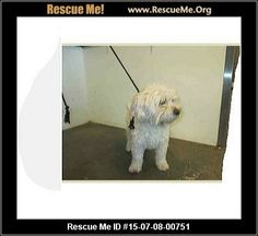 Pee wee (male)  Bichon Frise Mix  Age: Young Adult  Compatibility:Good with Most Dogs, Good with Kids and Adults Personality:Average Energy, Average Temperament Health:Needs to be Neutered, Vaccinations Current  Sweet dog  Adoption Fee: $122Animal Location:  West Valley Animal Shelter 20655 Plummer Street Los Angeles County Chatsworth, CA 91311 MAP IT!  Contact: anyone 818-756-9325