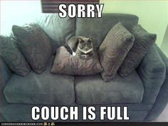 #sorry. #cats http://www.concealedcarrie.com/