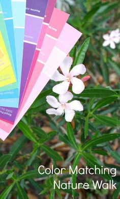 Color Matching Nature Walk-Spring Activity for Preschoolers Nature Activities, Outdoor Activities For Kids, Outdoor Learning, Spring Activities, Color Activities, Fun Learning, Preschool Activities, Toddler Learning, Montessori Toddler