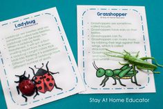 Preschool insect theme fact cards for a matching activity