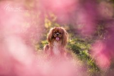 Broskový sad Dog Photography, Sad, Dogs, Animals, Animales, Animaux, Pet Dogs, Doggies, Animal
