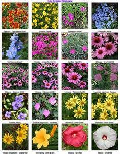 Late Summer Perennials - Bing Images