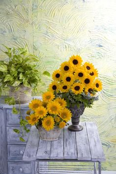 Sunflower Vincent's Choice & Fresh Looking Great Side By Side
