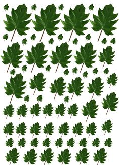 Lots Of Plant Printies Here, Click to see the rest