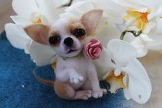 """Broche """"Chihuahua chien"""" : Broche par yana777"""