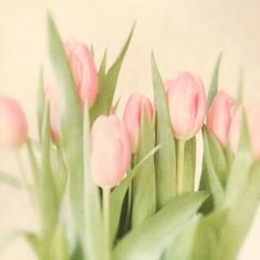 Pink tulips spring flowers pale green shabby chic by bomobob, $25.00
