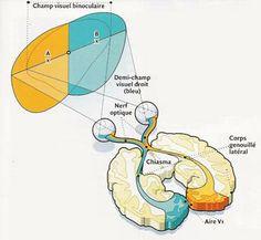 stéréoscopie