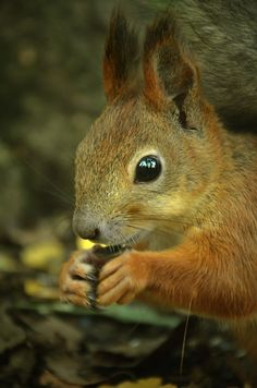 500px / Squirrel by IL Kölle.   Beautiful shot.