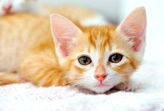 cutest little kit with big eyes - photo Josh Norem