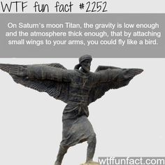 "I wanna go there and FLY LIKE A BIRD. I would just fly over people and shout, ""Tweet, tweet, motherfuckers!"""