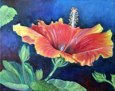 Cosmos Hibiscus