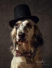 Handsome English gentleman.