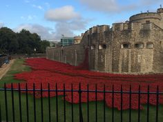 Tower if London poppies. 01/09/14