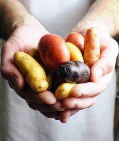 Potatoes are a mainstay in American diets. They hit the table in homes across the land every night. But all potatoes are not the same. Today we discuss the potato. Types Of Potatoes, Potato Types, Potato Recipes, Vegetable Recipes, Potato Bar, Fruits And Veggies, Vegetables, Delicious Fruit, Tasty Dishes