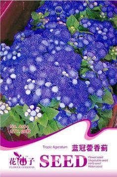 Flower seeds ageratum Thistle seeds wool muskiest bonsai 50 PCS / bag  Original packaging Home Garden Bonsai  Decor Pots