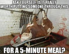 """govegan,meat-Confessions of a slaughterhouse worker in a """"humane slaughter"""" facility:""""I remember one cow somehow escaped the chute and slipped on the Reasons To Be Vegan, Factory Farming, Why Vegan, Stop Animal Cruelty, Vegan Animals, Get Shot, Going Vegan, Going Vegetarian, Vegan Vegetarian"""