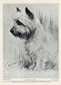 Cairns Rule! on Pinterest | Cairn Terriers, Shirley Temples and ...