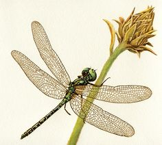 """Dragonfly & Flower"" burned on watercolor paper with color accents."