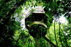 """Midden in de jungle van Costa Rica staat de boomhut """"Finca Bellavista"""""""