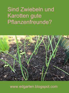 Mein Gemüsegarten verdoppelt sich Herbs, Plants, Earthworms, Carrots, Seeds, Herb, Planters, Plant, Spice