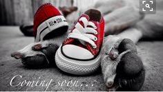 9 Fun and Simple Pregnancy Announcement Ideas Below are some super simple, super fun pregnancy announcement ideas. We hope they get your creative pregnancy announcement juices flowing! Maternity Pictures, Pregnancy Photos, Baby Pictures, Newborn Pictures, Pregnancy Announcement Shoes, Baby Announcements, Pregnant Dog, Pregnant Tips, Baby Sleep