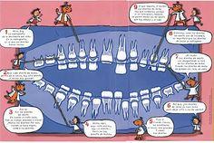 Soñando sonrisas...: Proyecto: ¿Por qué se caen los dientes?